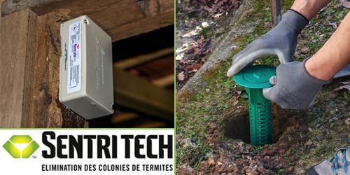 traitement termites extermination colonies ecobat