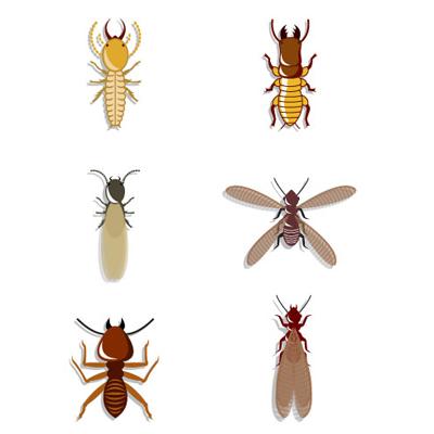 termites bois ecobat insectes