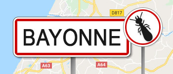 Termites Bayonne