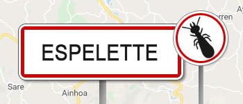 Termites Espelette