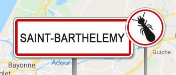 Termites Saint-Barthélemy