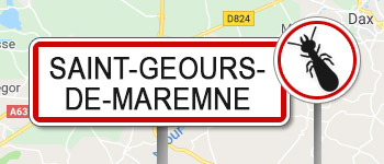 Termites Saint-Geours-de-Maremne