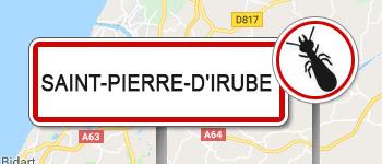 Termites Saint-Pierre-d'Irube