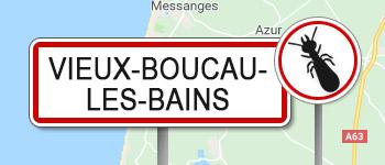 Termites Vieux-Boucau-les-Bains
