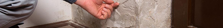 traitement termites Peyrehorade